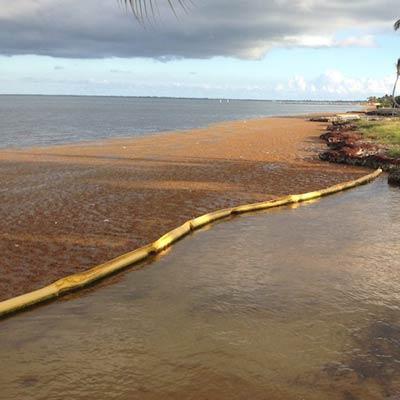 Floating Seaweed Barrier